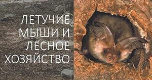 Forestry leaflet Belarus_Thumbnail