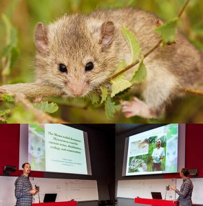 Nedko Nedyalkov presents findings of Roach's mouse-tailed dormouse at the International Dormouse Conference in Liege, Belgium, 2017 (Photographs: Nedko Nedyalkov & Dennis Wansink).