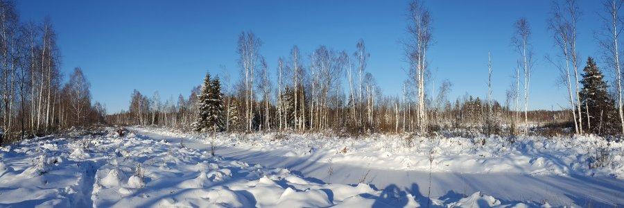 Naliboki forest - Belarus (Photo: Wild Naliboki / www.naliboki.org)