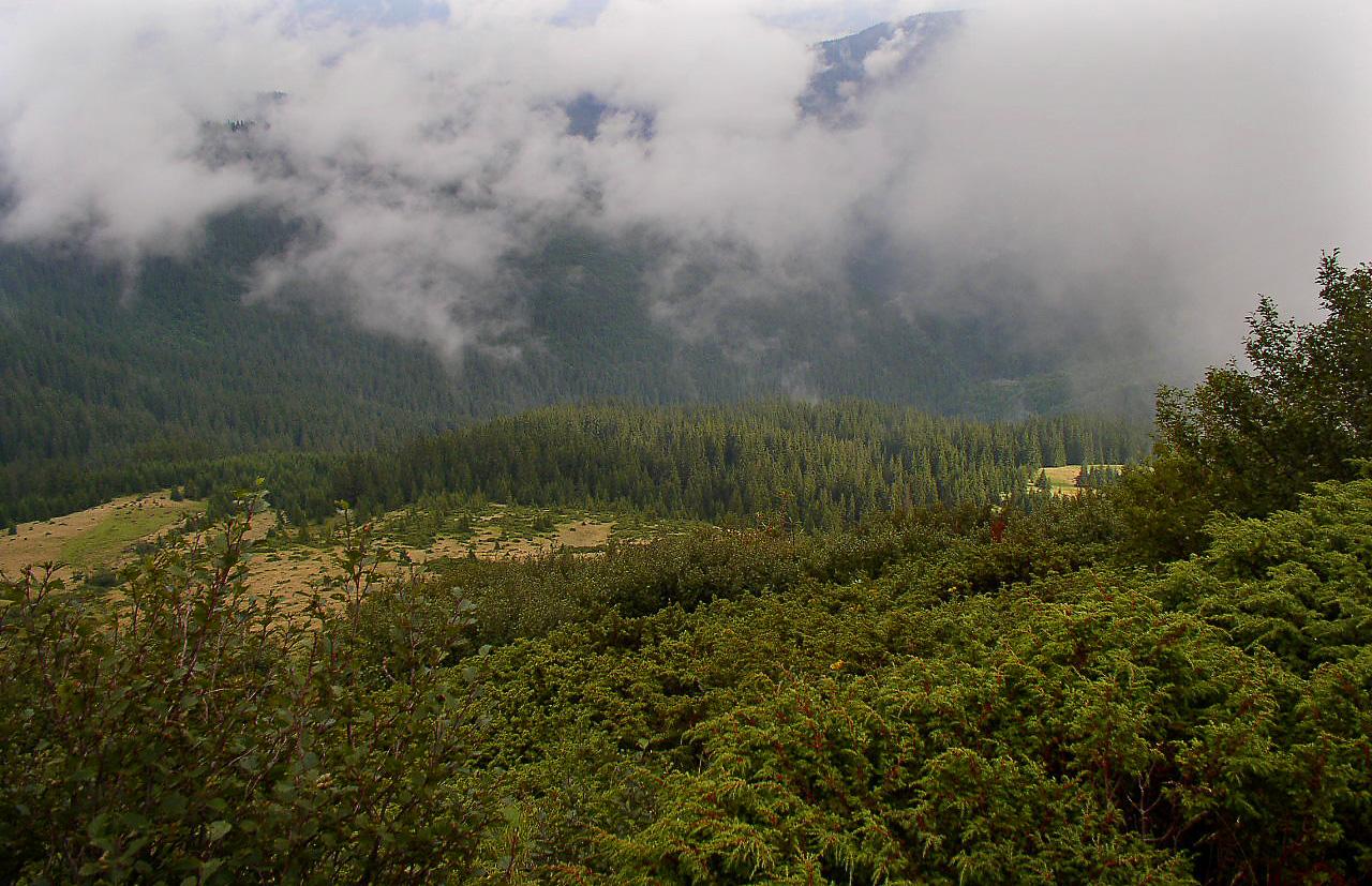 Carpathian forest in Ukraine (Photo: Alex Zelenko)