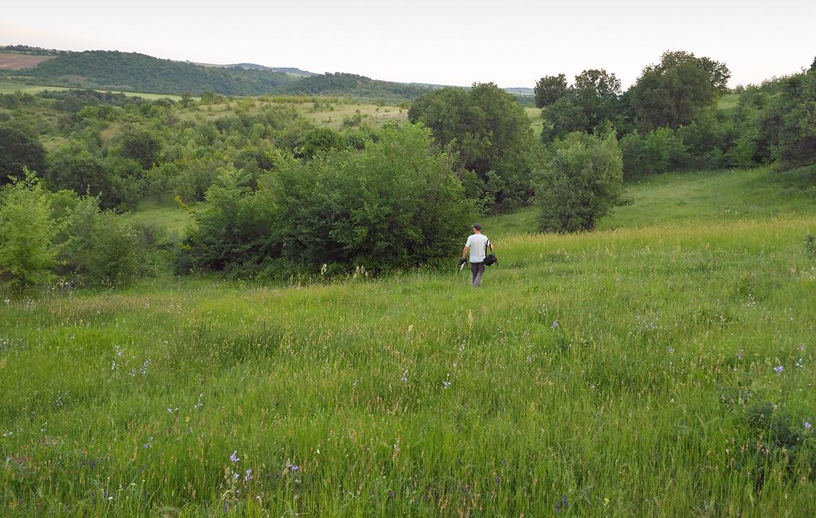The habitat of Mouse-tailed dormouse (Myomimus roachi) in Sakar mountains, SE Bulgaria (Photo: Zsolt Hegyeli).