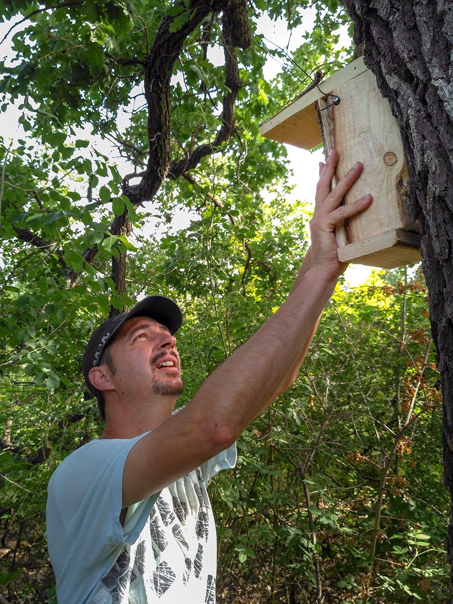 Installing nest boxes for Mouse-tailed dormouse (Myomimus roachi) (Photo: Zsolt Hegyeli)