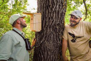 Installing nest boxes for Mouse-tailed dormouse (Photo: Nedko Nedyalkov)