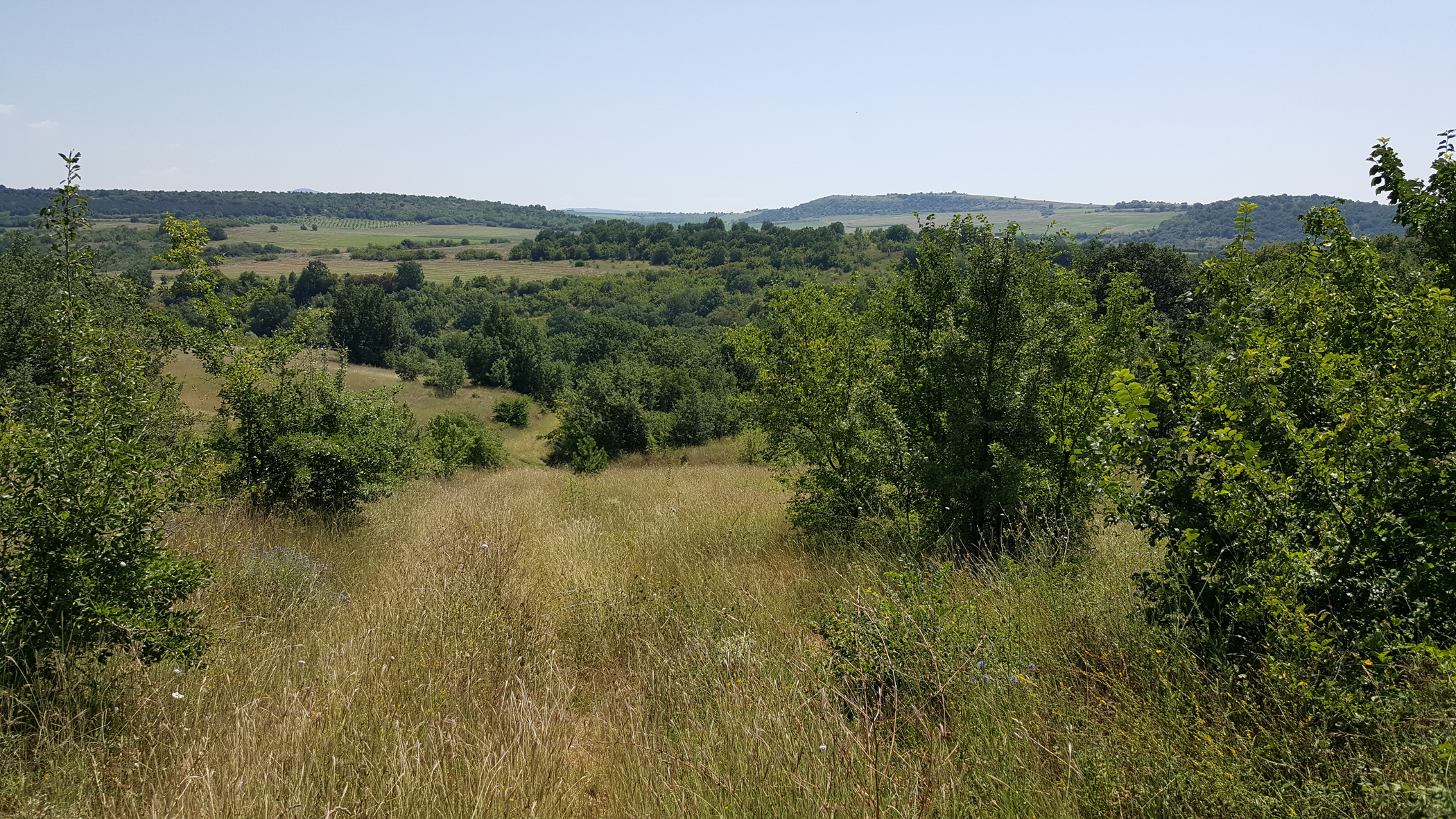 The habitat where nest boxes and tubes were placed in 2018 (Photo: Dennis Wansink)