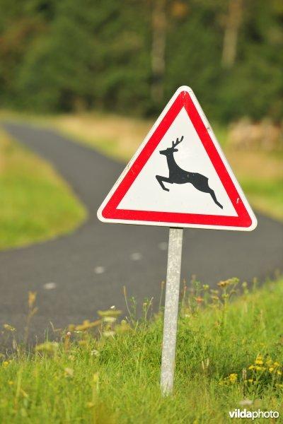 Beware of crossing wildlife (Photo: Yves Adams / Vilda)