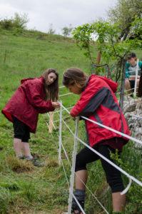 Fencing (Photo: Salviamo L'Orso)