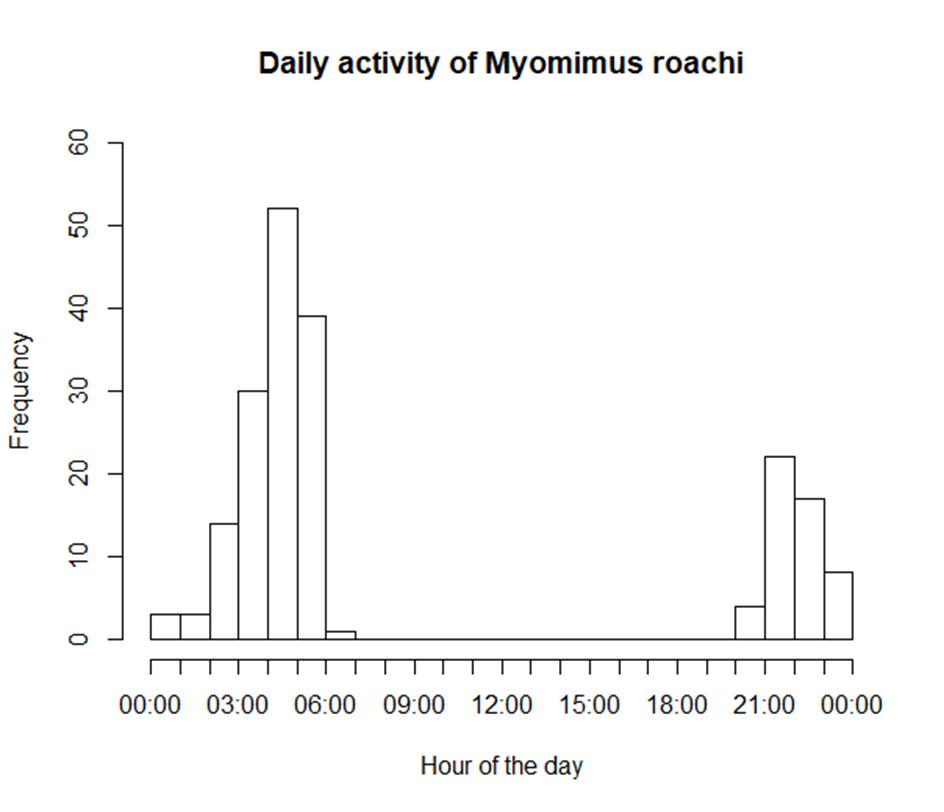 Daily activity of Roach's mouse-tailed dormouse (Nedko Nedyalkov April 2021)